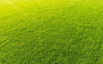 How Does a Synthetic Lawn Compare to a Real Lawn?