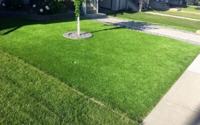 Why Would I Install Synthetic Turf and Not Keep My Natural Grass?