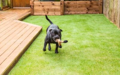 5 Benefits of Installing Artificial Grass in Portland OR