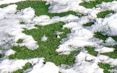 5 Tips to Prepare Your Synthetic Lawn for Winter